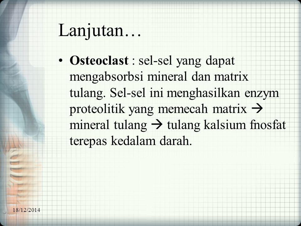 Lanjutan… Osteoclast : sel-sel yang dapat mengabsorbsi mineral dan matrix tulang. Sel-sel ini menghasilkan enzym proteolitik yang memecah matrix  min