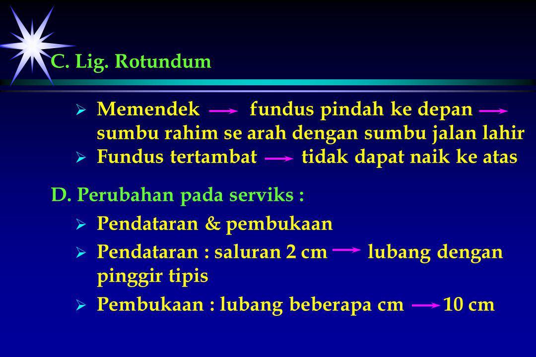 C. Lig. Rotundum   Memendek fundus pindah ke depan sumbu rahim se arah dengan sumbu jalan lahir   Fundus tertambat tidak dapat naik ke atas D. Per