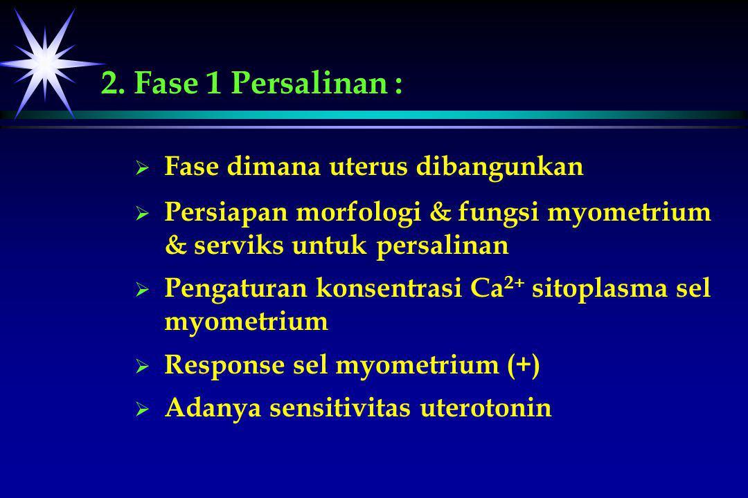 2. Fase 1 Persalinan :   Fase dimana uterus dibangunkan   Persiapan morfologi & fungsi myometrium & serviks untuk persalinan   Pengaturan konsen