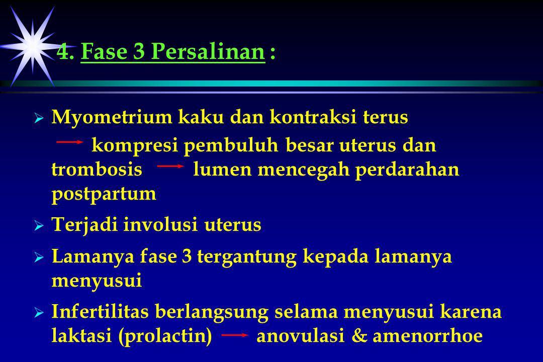 4. Fase 3 Persalinan :   Myometrium kaku dan kontraksi terus kompresi pembuluh besar uterus dan trombosis lumen mencegah perdarahan postpartum   T
