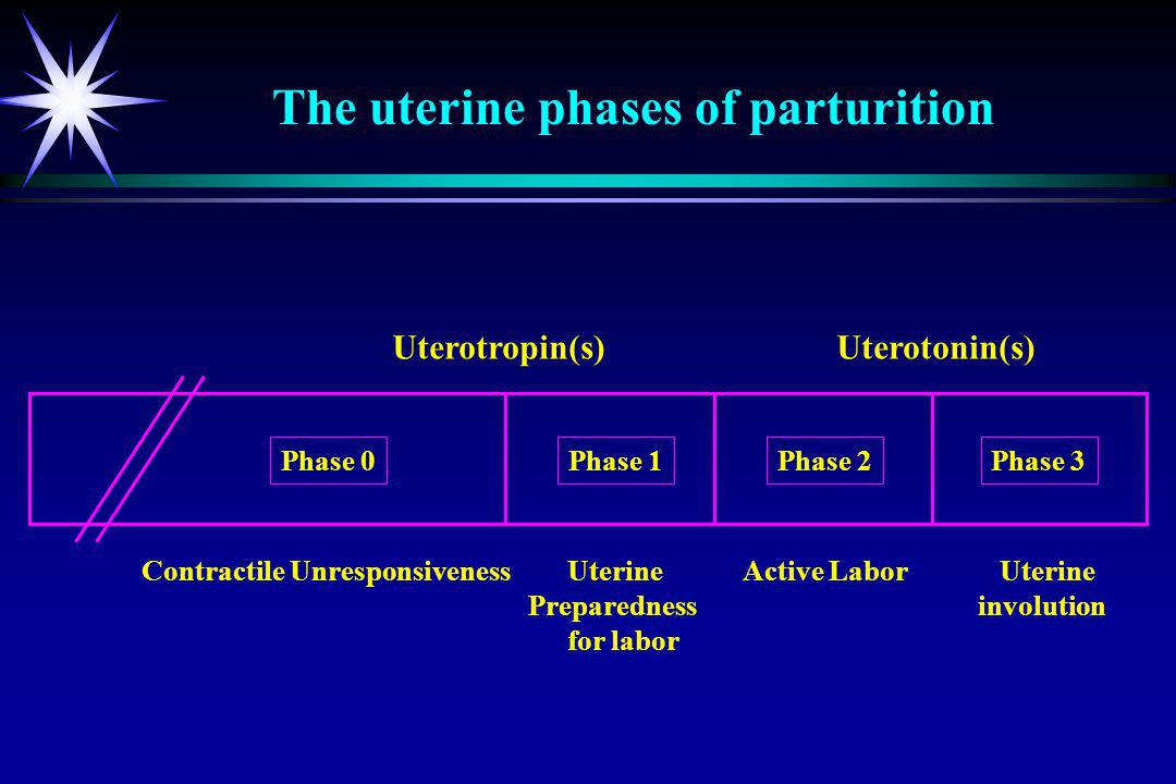 Uterotropin(s) Uterotonin(s) Contractile Unresponsiveness Uterine Active Labor Uterine Preparednessinvolution for labor Phase 0Phase 1Phase 2Phase 3 The uterine phases of parturition
