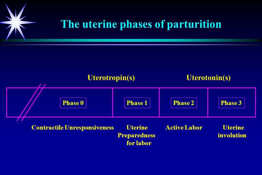 Uterotropin(s) Uterotonin(s) Contractile Unresponsiveness Uterine Active Labor Uterine Preparednessinvolution for labor Phase 0Phase 1Phase 2Phase 3 T