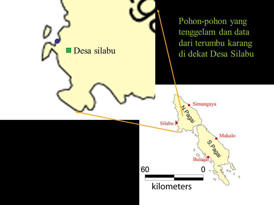 Desa silabu Pohon-pohon yang tenggelam dan data dari terumbu karang di dekat Desa Silabu