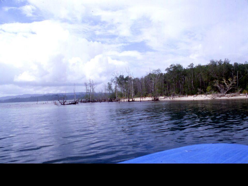 The Sumatran GPS Array (SuGAr)