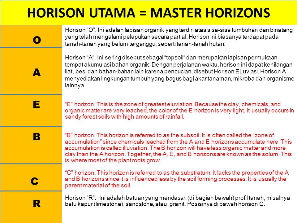 "HORISON UTAMA = MASTER HORIZONS O A E B C R Horison ""O"". Ini adalah lapisan organik yang terdiri atas sisa-sisa tumbuhan dan binatang yang telah menga"