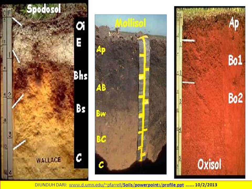 DIUNDUH DARI: www.d.umn.edu/~pfarrell/Soils/powerpoints/profile.ppt …….