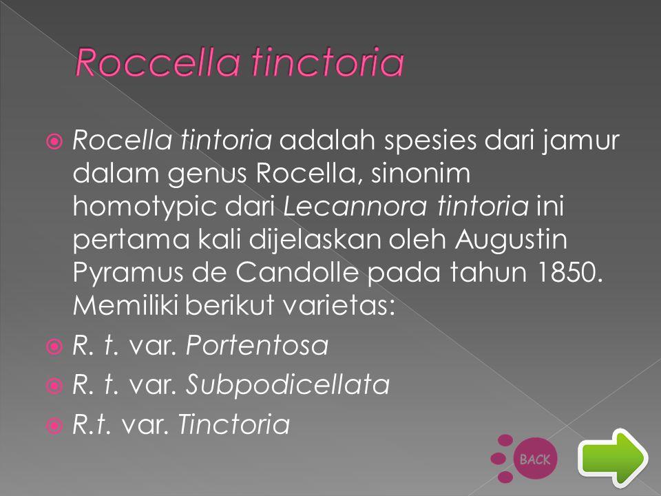  Rocella tintoria adalah spesies dari jamur dalam genus Rocella, sinonim homotypic dari Lecannora tintoria ini pertama kali dijelaskan oleh Augustin