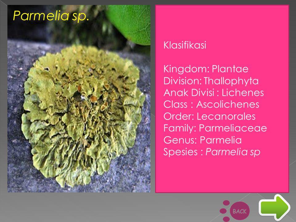 Parmelia sp. Klasifikasi Kingdom: Plantae Division: Thallophyta Anak Divisi : Lichenes Class : Ascolichenes Order: Lecanorales Family: Parmeliaceae Ge