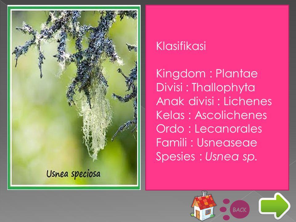 Klasifikasi Kingdom : Plantae Divisi : Thallophyta Anak divisi : Lichenes Kelas : Ascolichenes Ordo : Lecanorales Famili : Usneaseae Spesies : Usnea s