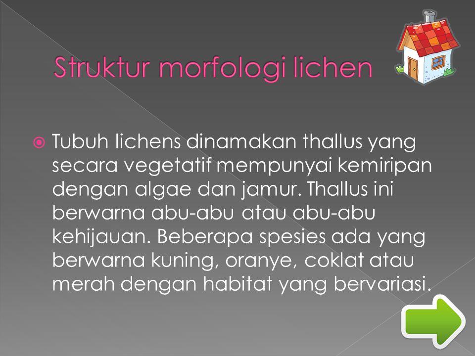  Tubuh lichens dinamakan thallus yang secara vegetatif mempunyai kemiripan dengan algae dan jamur. Thallus ini berwarna abu-abu atau abu-abu kehijaua