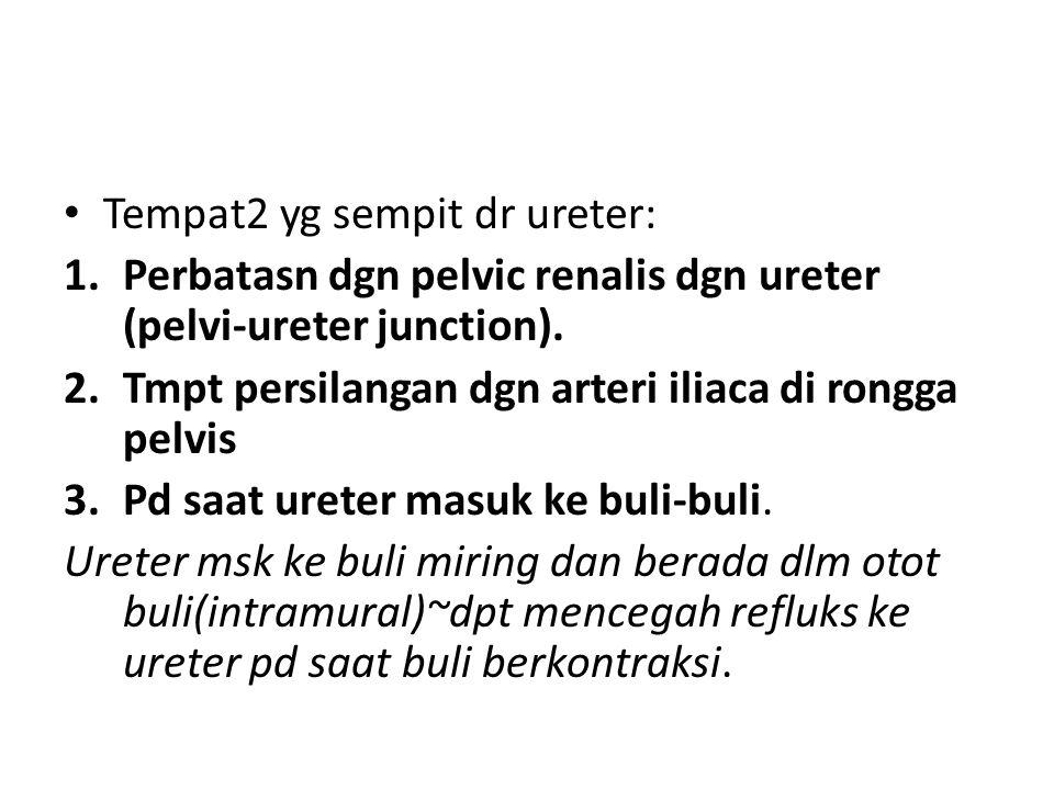 Tempat2 yg sempit dr ureter: 1.Perbatasn dgn pelvic renalis dgn ureter (pelvi-ureter junction).