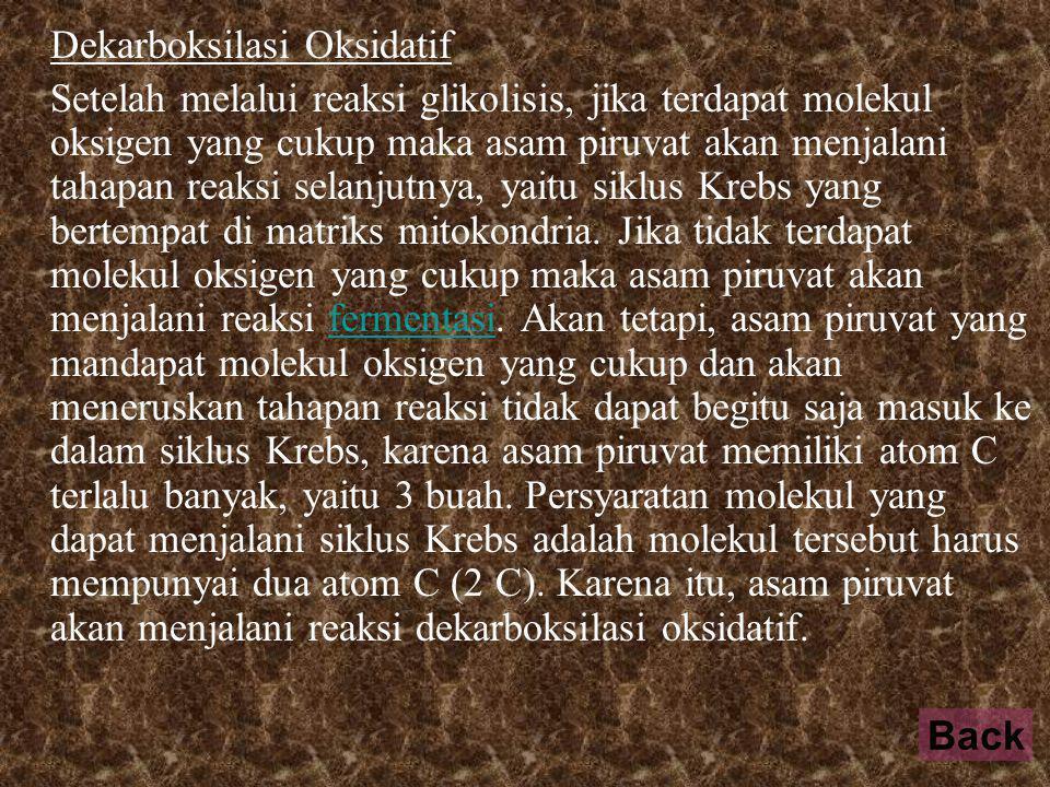 Dekarboksilasi Oksidatif Setelah melalui reaksi glikolisis, jika terdapat molekul oksigen yang cukup maka asam piruvat akan menjalani tahapan reaksi selanjutnya, yaitu siklus Krebs yang bertempat di matriks mitokondria.