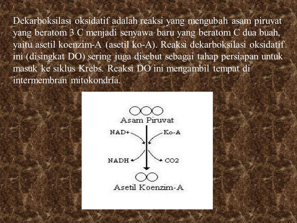 Dekarboksilasi oksidatif adalah reaksi yang mengubah asam piruvat yang beratom 3 C menjadi senyawa baru yang beratom C dua buah, yaitu asetil koenzim-A (asetil ko-A).