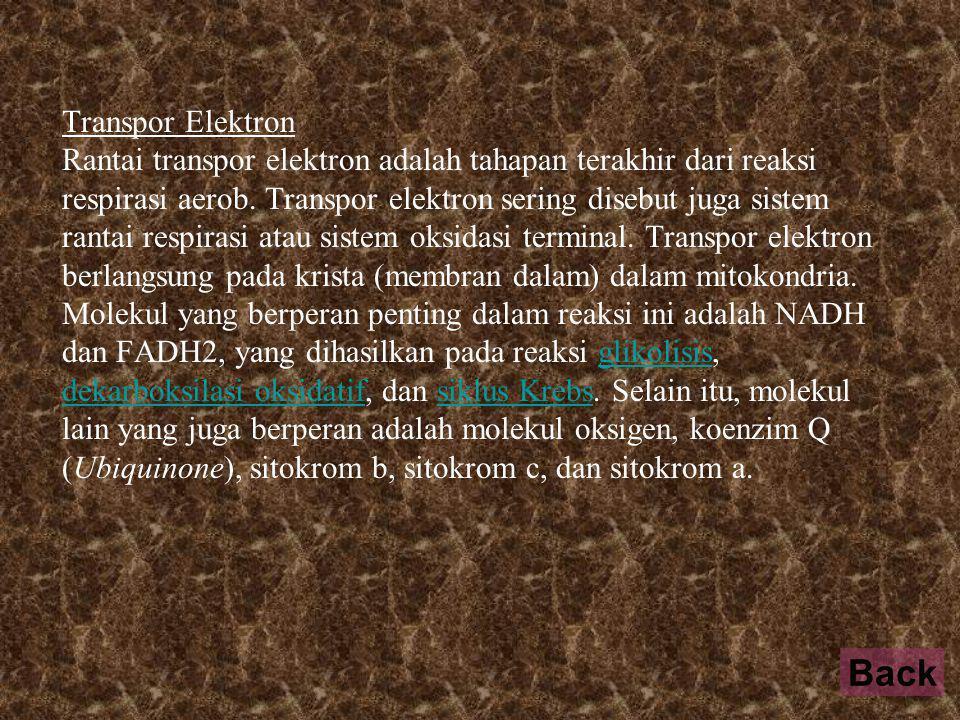 Transpor Elektron Rantai transpor elektron adalah tahapan terakhir dari reaksi respirasi aerob.