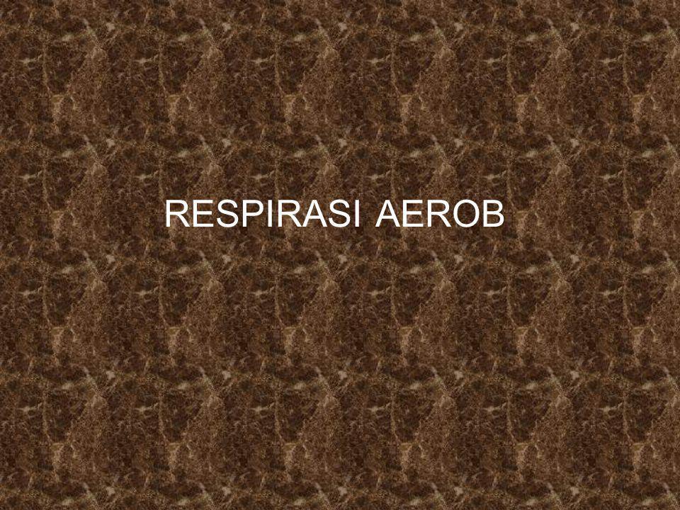RESPIRASI AEROB