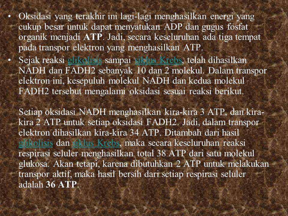 Oksidasi yang terakhir ini lagi-lagi menghasilkan energi yang cukup besar untuk dapat menyatukan ADP dan gugus fosfat organik menjadi ATP.