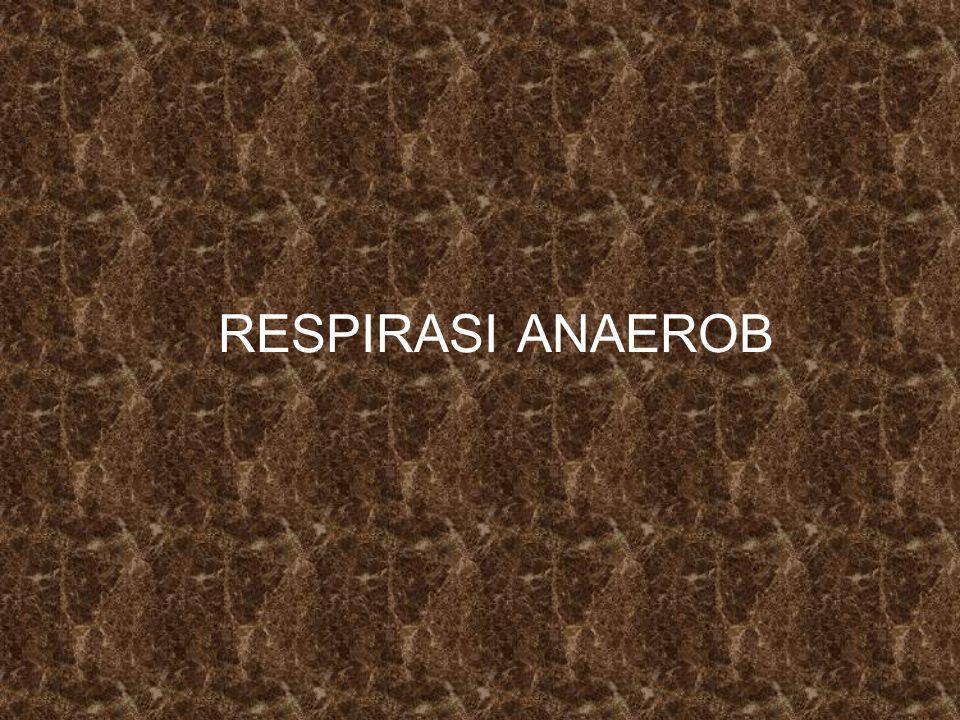 RESPIRASI ANAEROB