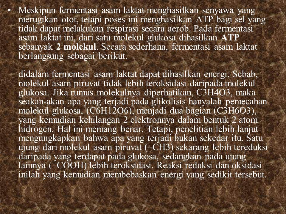 Meskipun fermentasi asam laktat menghasilkan senyawa yang merugikan otot, tetapi poses ini menghasilkan ATP bagi sel yang tidak dapat melakukan respirasi secara aerob.