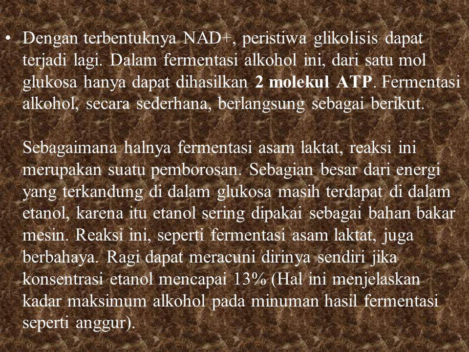 Dengan terbentuknya NAD+, peristiwa glikolisis dapat terjadi lagi.