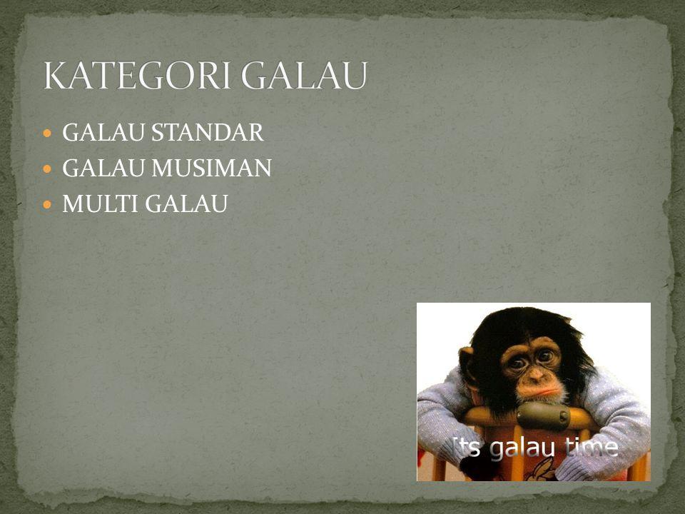 GALAU STANDAR GALAU MUSIMAN MULTI GALAU