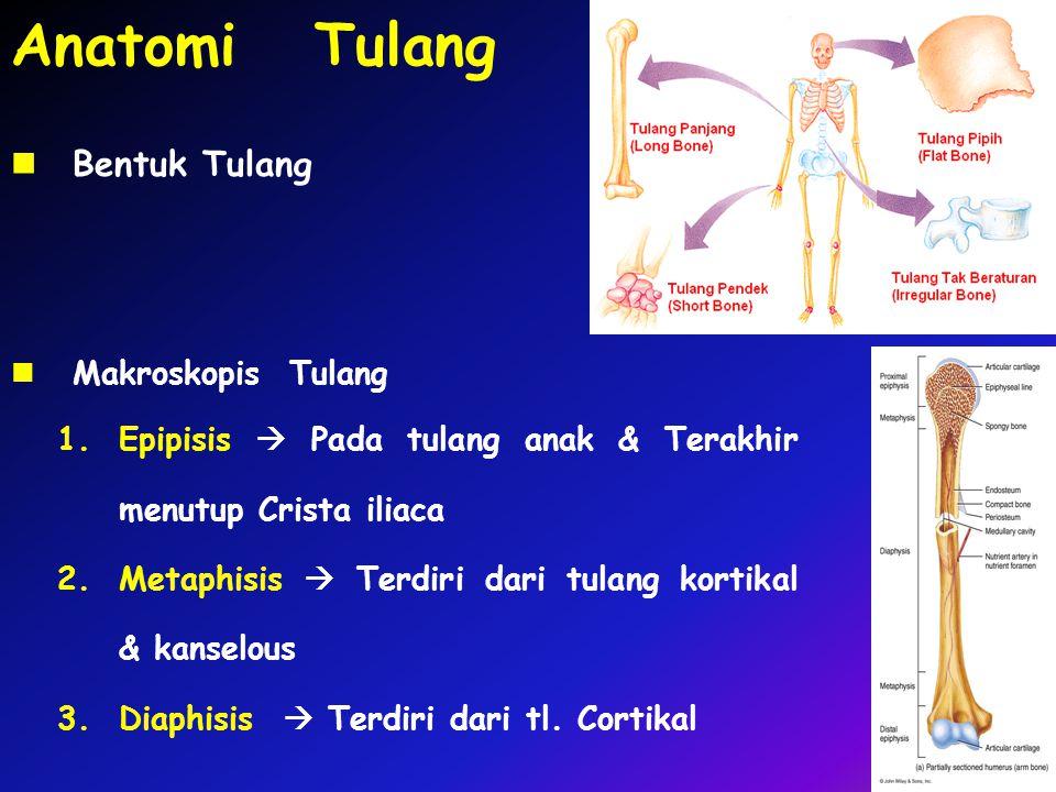 Anatomi Tulang Makroskopis Tulang 1.Epipisis  Pada tulang anak & Terakhir menutup Crista iliaca 2.Metaphisis  Terdiri dari tulang kortikal & kanselous 3.Diaphisis  Terdiri dari tl.
