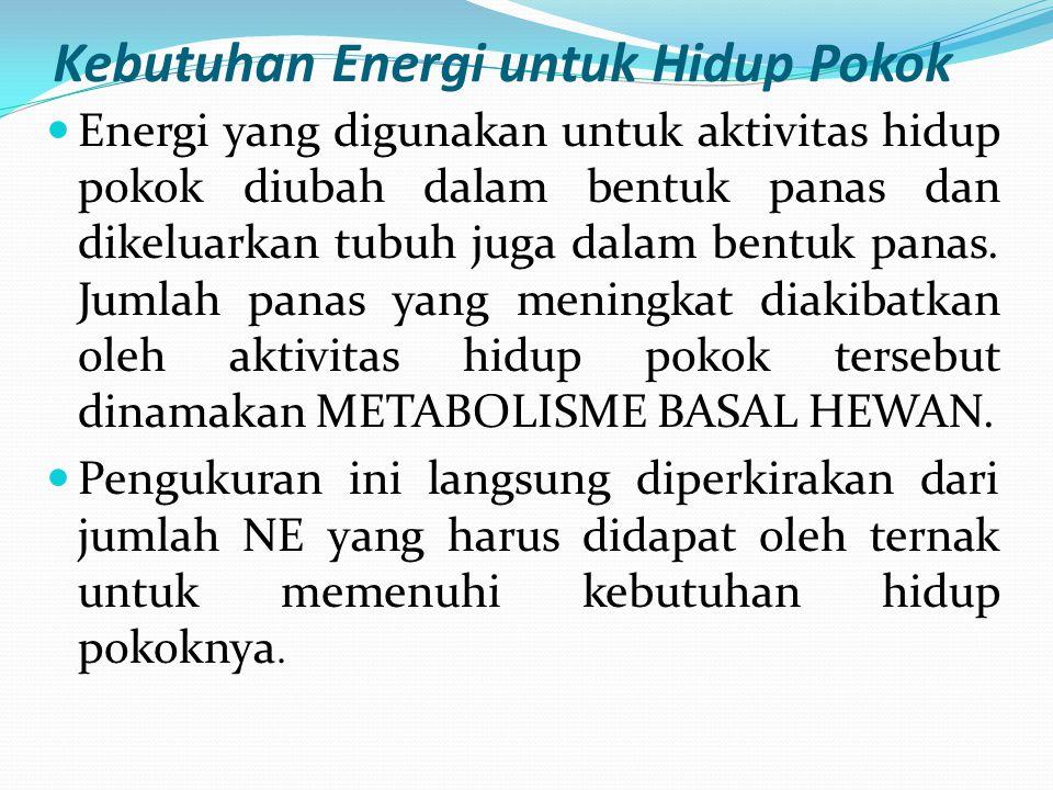 Kebutuhan Energi untuk Hidup Pokok Energi yang digunakan untuk aktivitas hidup pokok diubah dalam bentuk panas dan dikeluarkan tubuh juga dalam bentuk
