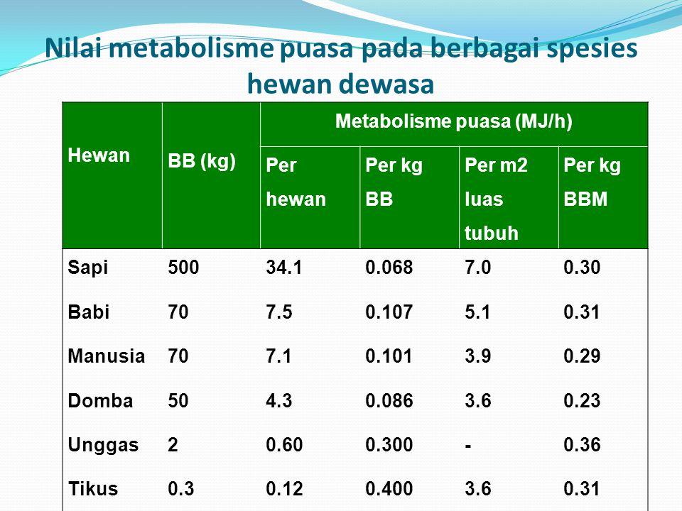 Nilai metabolisme puasa pada berbagai spesies hewan dewasa Hewan BB (kg) Metabolisme puasa (MJ/h) Per hewan Per kg BB Per m2 luas tubuh Per kg BBM Sapi50034.10.0687.00.30 Babi707.50.1075.10.31 Manusia707.10.1013.90.29 Domba504.30.0863.60.23 Unggas20.600.300-0.36 Tikus0.30.120.4003.60.31
