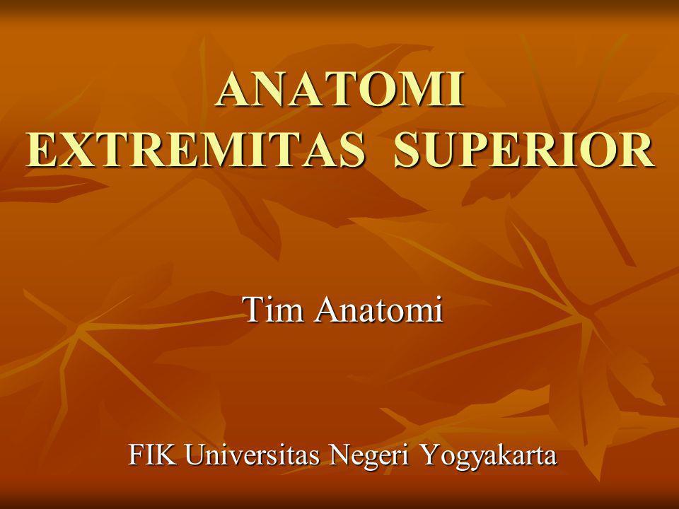 ANATOMI EXTREMITAS SUPERIOR Tim Anatomi FIK Universitas Negeri Yogyakarta