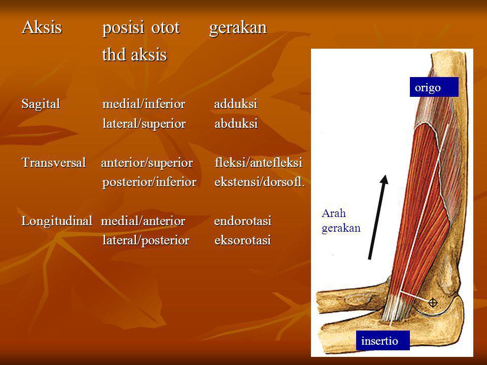 Aksis posisi otot gerakan thd aksis thd aksis Sagital medial/inferior adduksi lateral/superior abduksi lateral/superior abduksi Transversal anterior/s