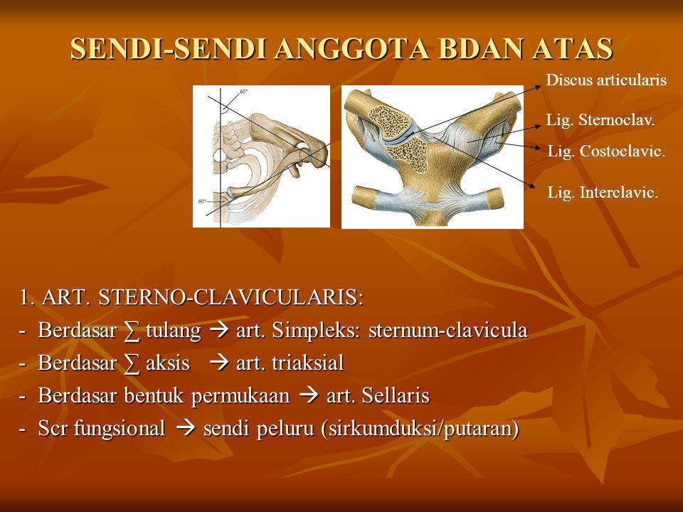 SENDI-SENDI ANGGOTA BDAN ATAS 1. ART. STERNO-CLAVICULARIS: - Berdasar ∑ tulang  art. Simpleks: sternum-clavicula - Berdasar ∑ aksis  art. triaksial