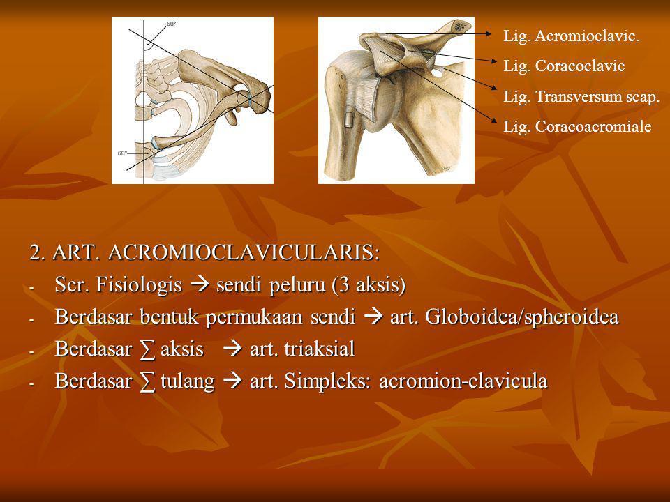 2. ART. ACROMIOCLAVICULARIS: - Scr. Fisiologis  sendi peluru (3 aksis) - Berdasar bentuk permukaan sendi  art. Globoidea/spheroidea - Berdasar ∑ aks
