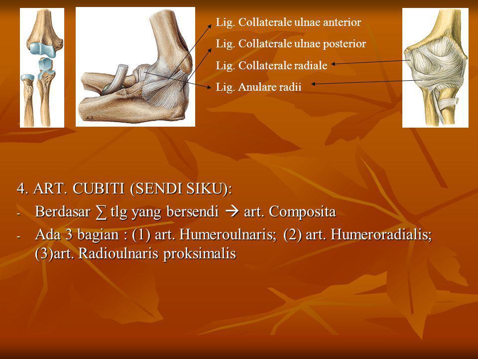 4. ART. CUBITI (SENDI SIKU): - Berdasar ∑ tlg yang bersendi  art. Composita - Ada 3 bagian : (1) art. Humeroulnaris; (2) art. Humeroradialis; (3)art.