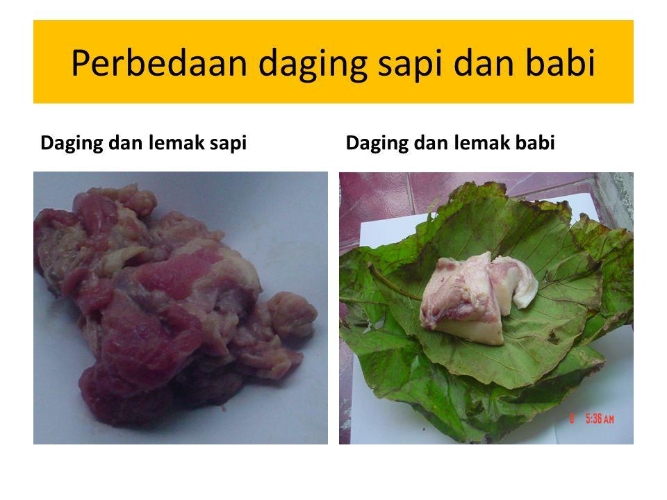 Perbedaan daging sapi dan babi Daging dan lemak sapiDaging dan lemak babi