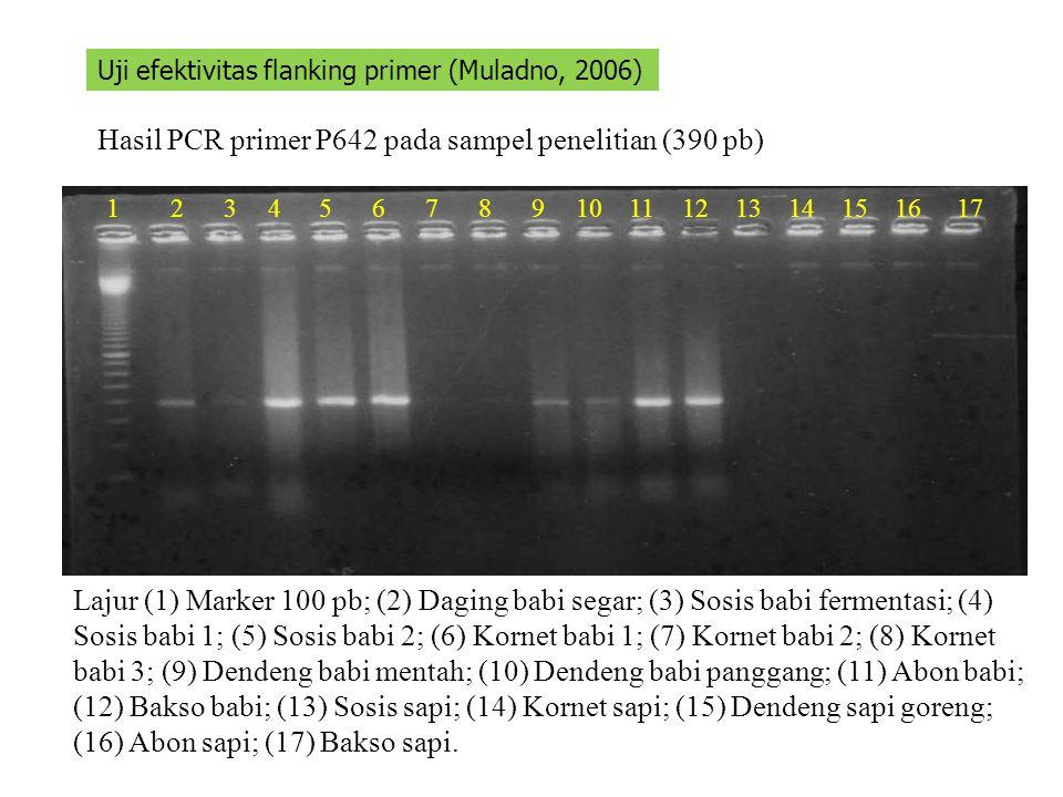 Hasil PCR primer P642 pada sampel penelitian (390 pb) 1234567891011121314151617 Uji efektivitas flanking primer (Muladno, 2006) Lajur (1) Marker 100 p