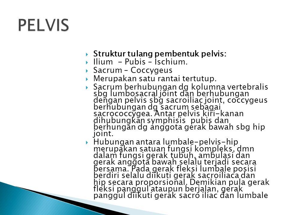  Struktur tulang pembentuk pelvis:  Ilium - Pubis – Ischium.  Sacrum – Coccygeus  Merupakan satu rantai tertutup.  Sacrum berhubungan dg kolumna