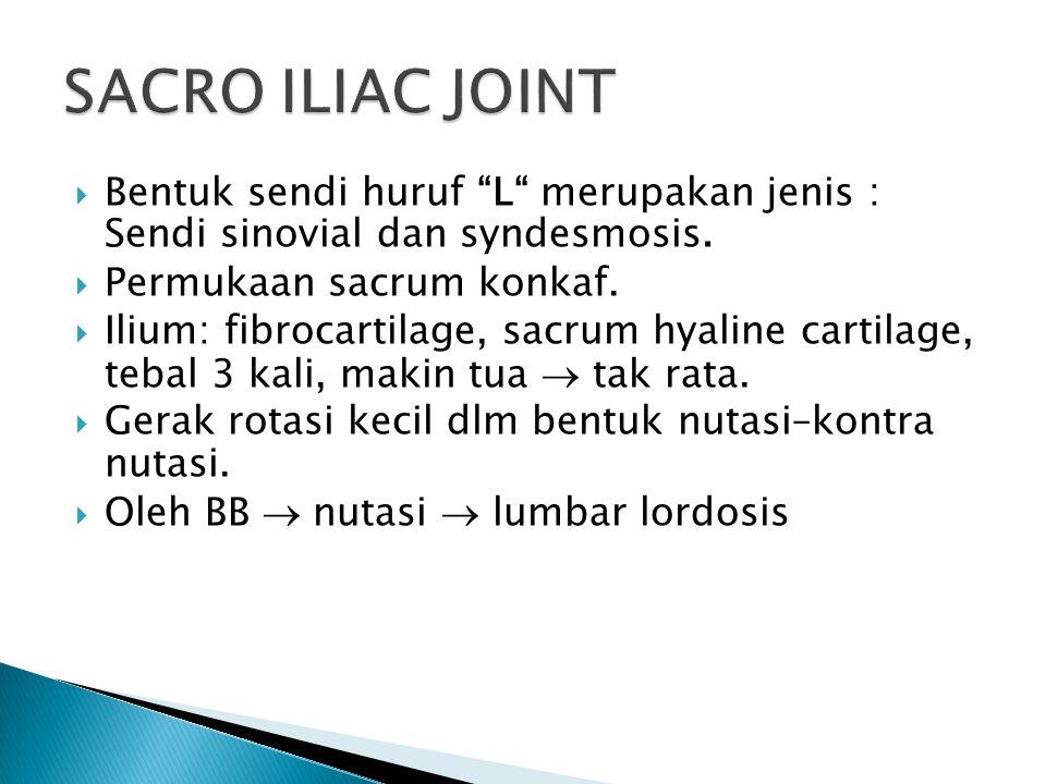 """ Bentuk sendi huruf """"L"""" merupakan jenis : Sendi sinovial dan syndesmosis.  Permukaan sacrum konkaf.  Ilium: fibrocartilage, sacrum hyaline cartilag"""