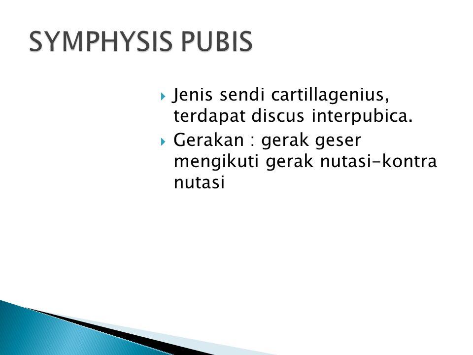  Jenis sendi cartillagenius, terdapat discus interpubica.  Gerakan : gerak geser mengikuti gerak nutasi-kontra nutasi