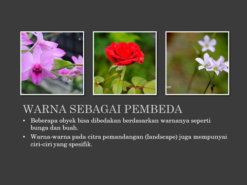 Beberapa obyek bisa dibedakan berdasarkan warnanya seperti bunga dan buah. Warna-warna pada citra pemandangan (landscape) juga mempunyai ciri-ciri yan