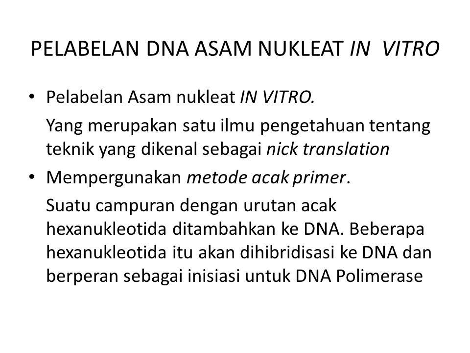 PELABELAN DNA ASAM NUKLEAT IN VITRO Pelabelan Asam nukleat IN VITRO.