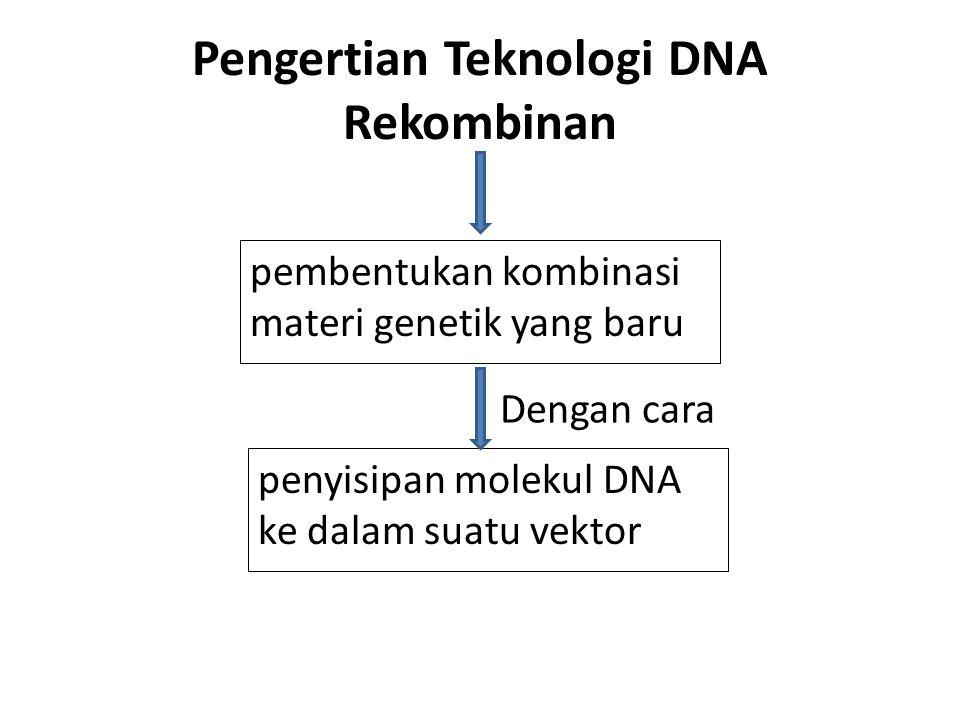 Pengertian Teknologi DNA Rekombinan pembentukan kombinasi materi genetik yang baru penyisipan molekul DNA ke dalam suatu vektor Dengan cara