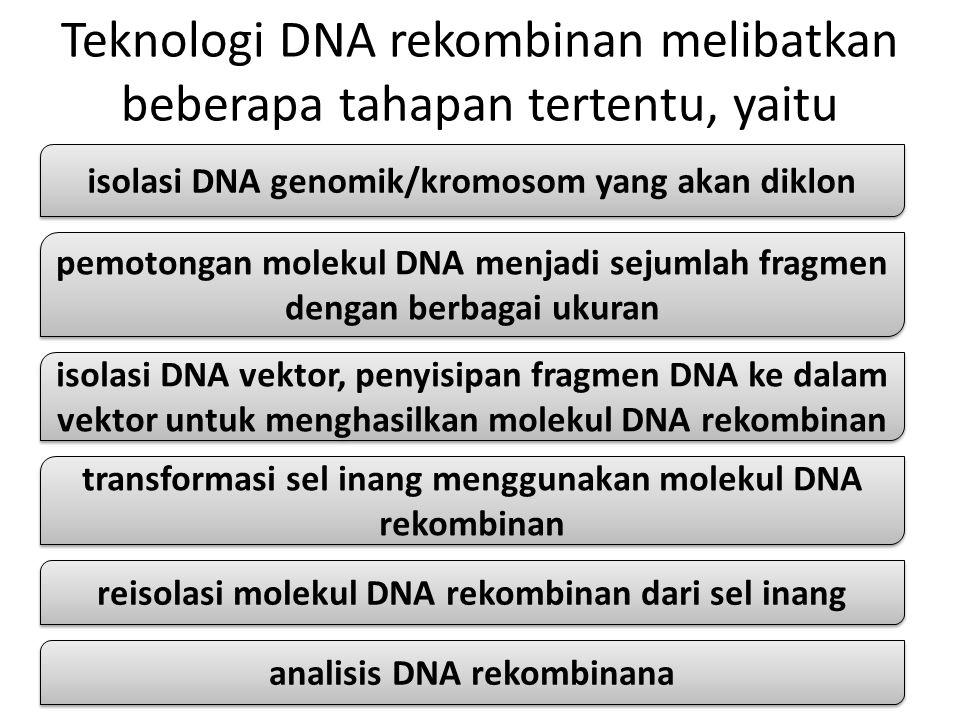 Teknologi DNA rekombinan melibatkan beberapa tahapan tertentu, yaitu isolasi DNA genomik/kromosom yang akan diklon pemotongan molekul DNA menjadi sejumlah fragmen dengan berbagai ukuran isolasi DNA vektor, penyisipan fragmen DNA ke dalam vektor untuk menghasilkan molekul DNA rekombinan transformasi sel inang menggunakan molekul DNA rekombinan reisolasi molekul DNA rekombinan dari sel inang analisis DNA rekombinana