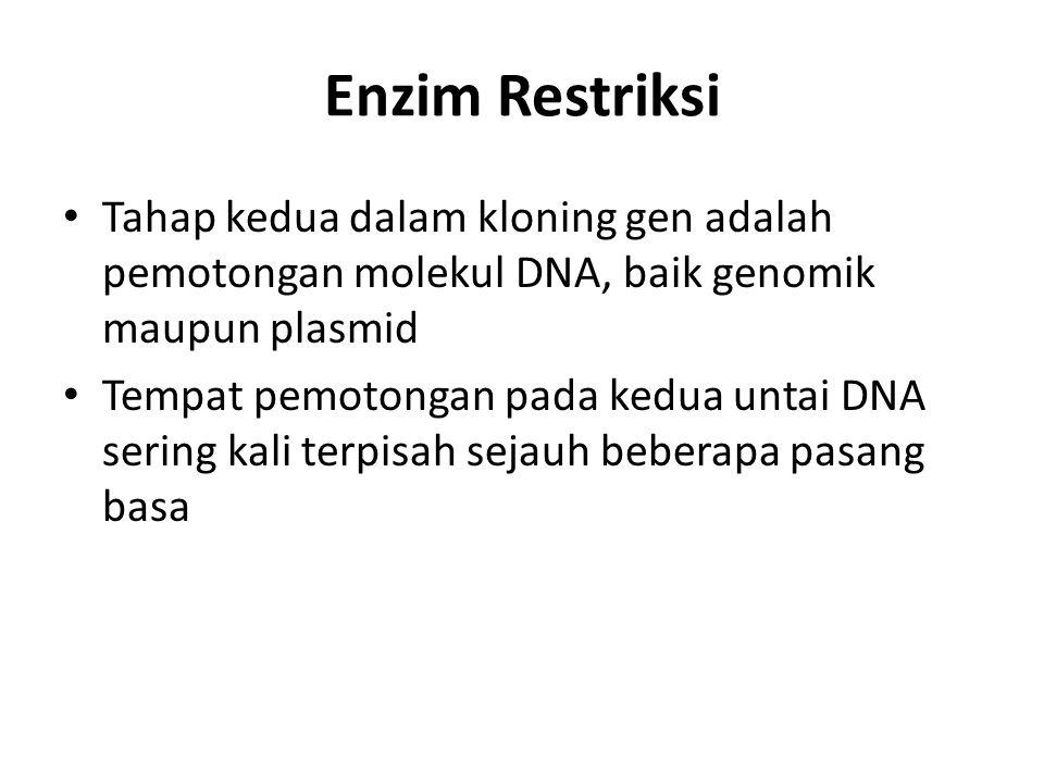Enzim Restriksi Tahap kedua dalam kloning gen adalah pemotongan molekul DNA, baik genomik maupun plasmid Tempat pemotongan pada kedua untai DNA sering kali terpisah sejauh beberapa pasang basa