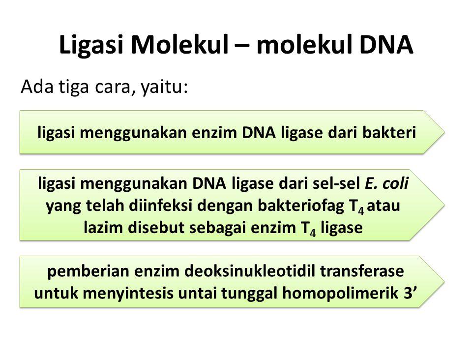 Ligasi Molekul – molekul DNA Ada tiga cara, yaitu: ligasi menggunakan enzim DNA ligase dari bakteri ligasi menggunakan DNA ligase dari sel-sel E.
