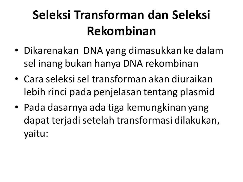 Seleksi Transforman dan Seleksi Rekombinan Dikarenakan DNA yang dimasukkan ke dalam sel inang bukan hanya DNA rekombinan Cara seleksi sel transforman akan diuraikan lebih rinci pada penjelasan tentang plasmid Pada dasarnya ada tiga kemungkinan yang dapat terjadi setelah transformasi dilakukan, yaitu: