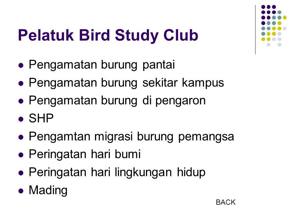Pelatuk Bird Study Club Pengamatan burung pantai Pengamatan burung sekitar kampus Pengamatan burung di pengaron SHP Pengamtan migrasi burung pemangsa Peringatan hari bumi Peringatan hari lingkungan hidup Mading BACK