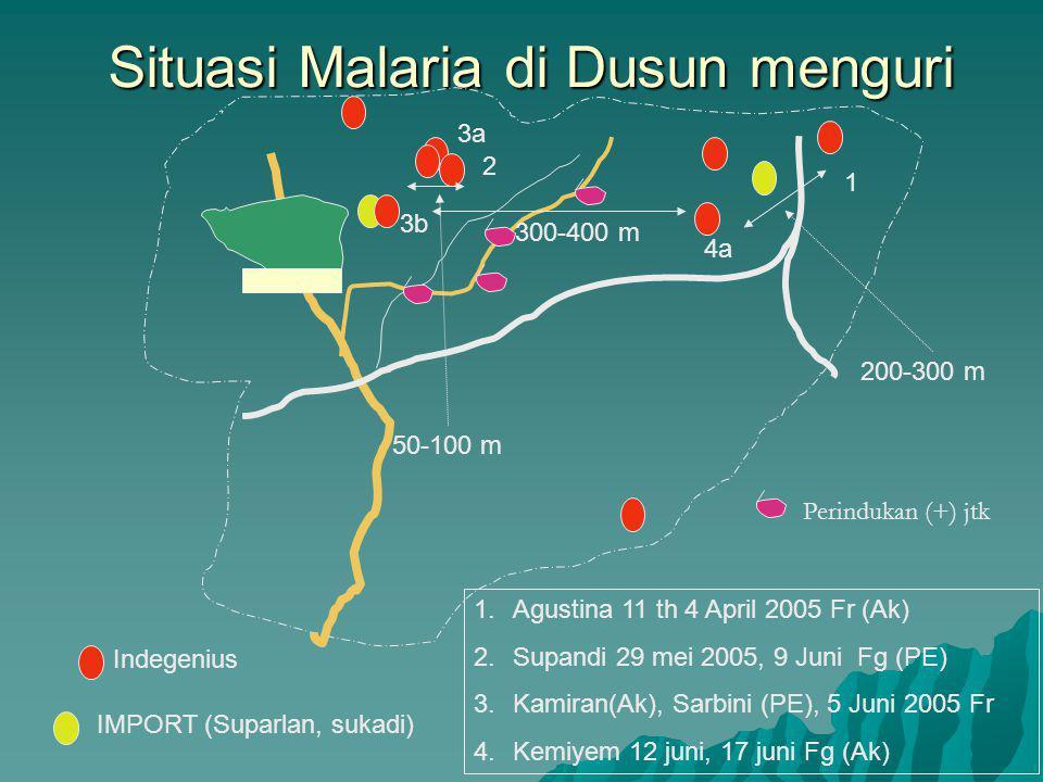 Situasi Malaria di Dusun menguri 1 2 3a 4a 3b 1.Agustina 11 th 4 April 2005 Fr (Ak) 2.Supandi 29 mei 2005, 9 Juni Fg (PE) 3.Kamiran(Ak), Sarbini (PE), 5 Juni 2005 Fr 4.Kemiyem 12 juni, 17 juni Fg (Ak) Indegenius IMPORT (Suparlan, sukadi) 200-300 m 50-100 m 300-400 m Perindukan (+) jtk