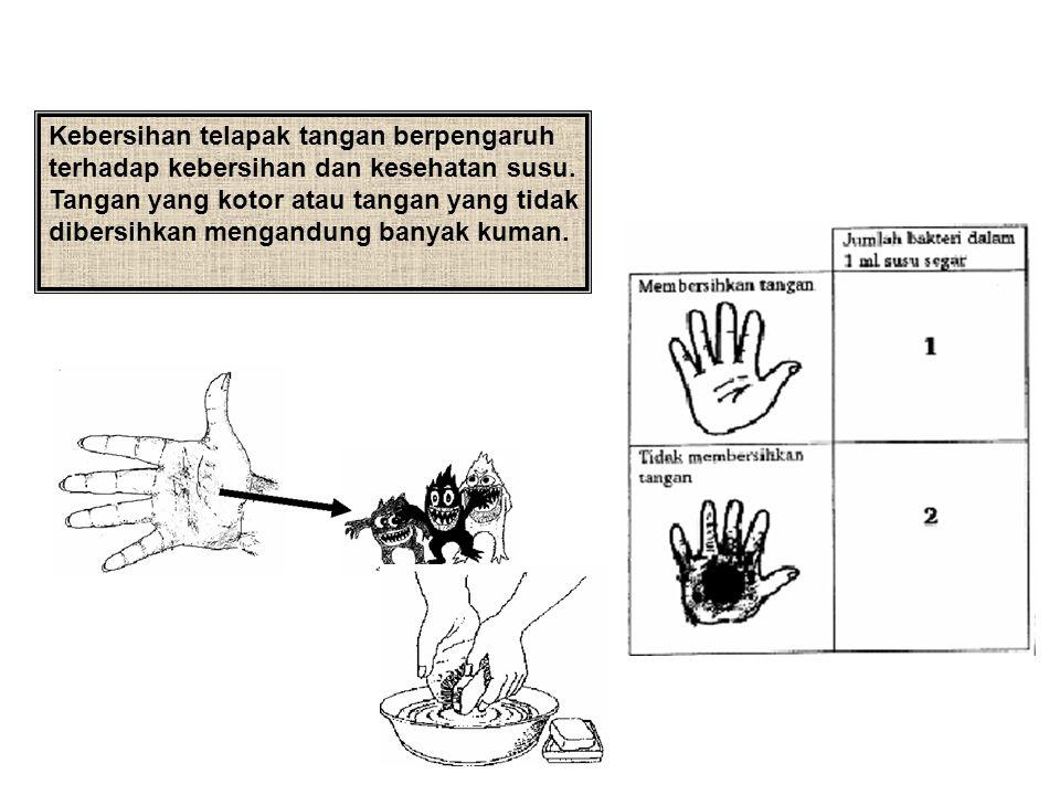 Kebersihan telapak tangan berpengaruh terhadap kebersihan dan kesehatan susu. Tangan yang kotor atau tangan yang tidak dibersihkan mengandung banyak k
