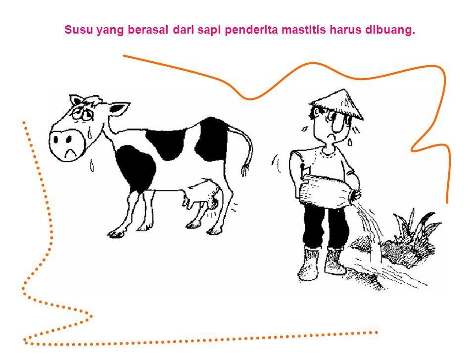 Susu yang berasal dari sapi penderita mastitis harus dibuang.