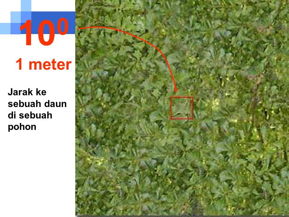 Jarak ke sebuah daun di sebuah pohon 10 0 1 meter