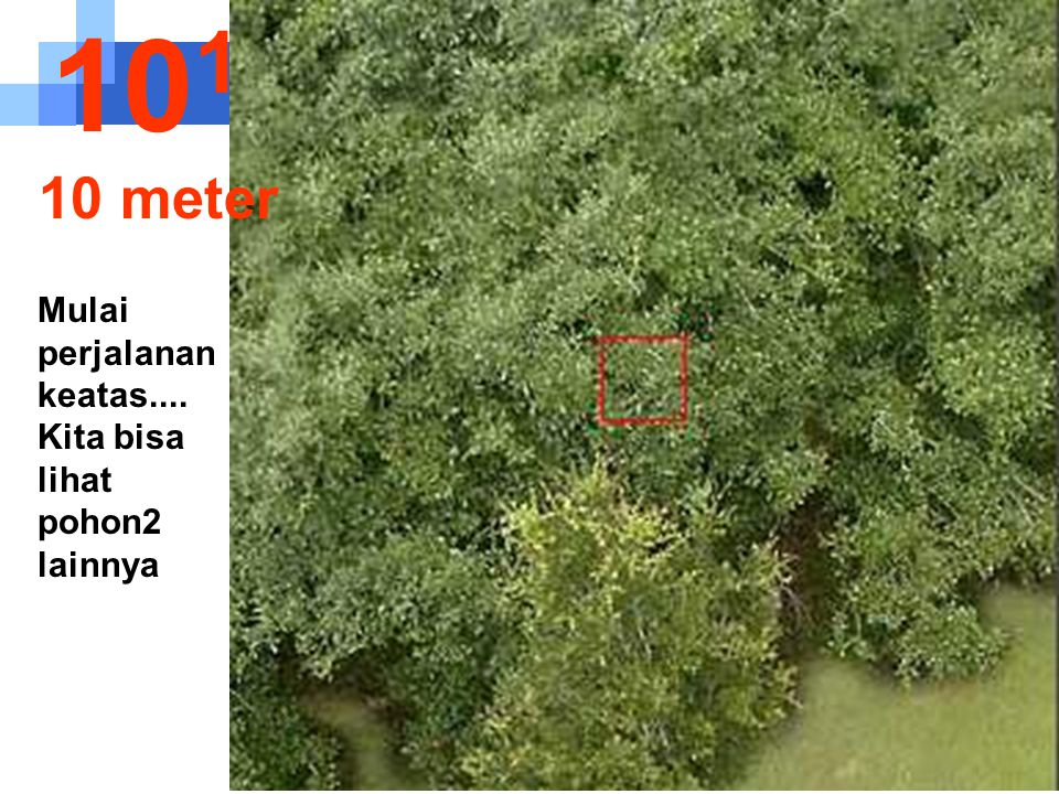 Pada jarak ini kita dapat mengobser- vasi struktur dari daun.... 10 -2 1 sentímeter